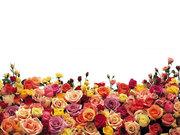 Миллион,  миллион алых роз! Онлайн – Каталоги! Поздравь близких!