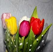Голландские тюльпаны оптом в Новосибирске к 8 марта от производителя