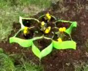 Клумба ― цветник