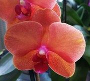 Все для орхидей и антуриумов.