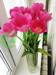 Тюльпаны оптом от 25 р со склада в Новосибирске!